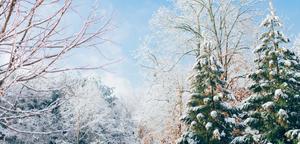 thumbnails Nordic Christmas Activities